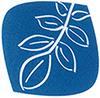 Logo der Nußbaum-Apotheke
