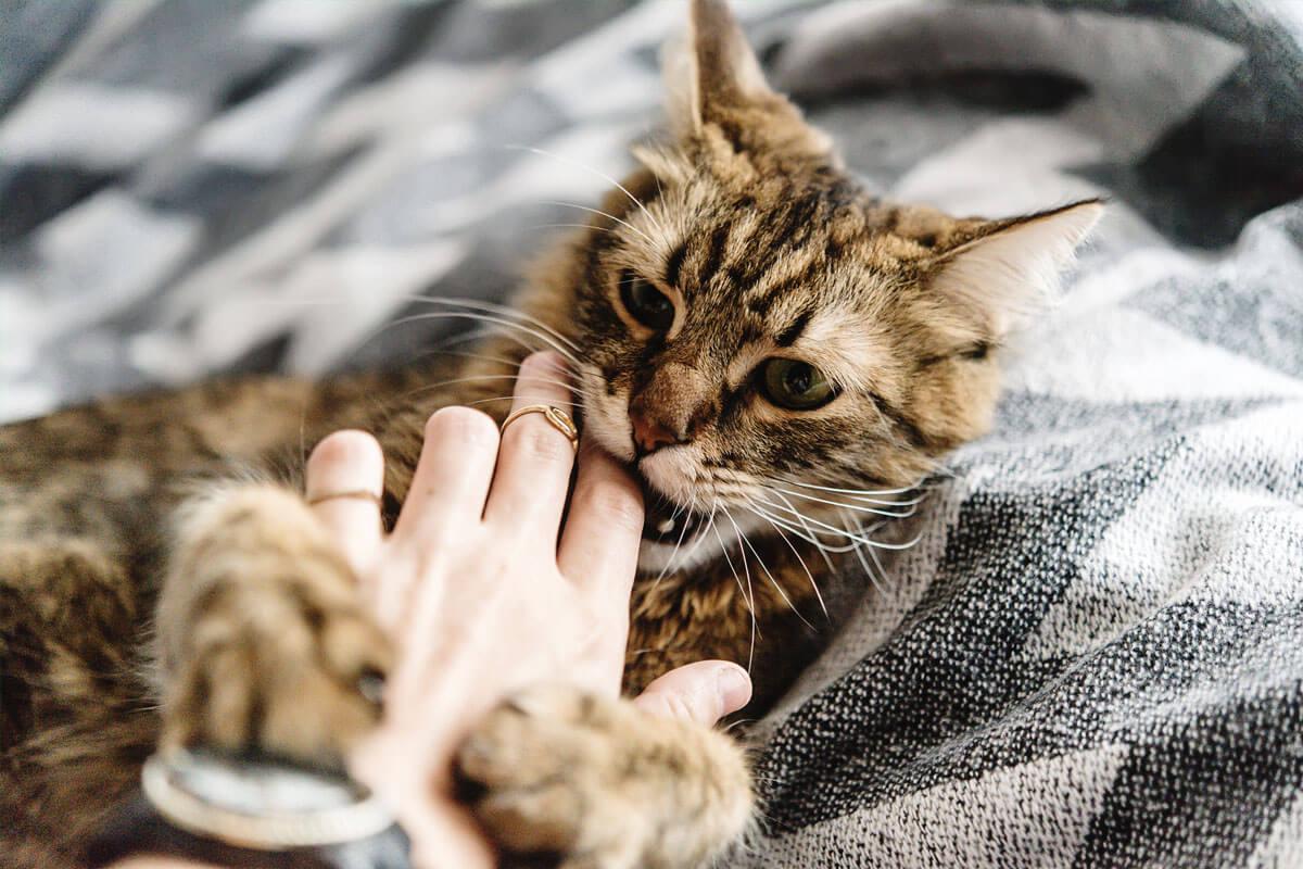 Bei Katzenbissen: Ab zum Arzt