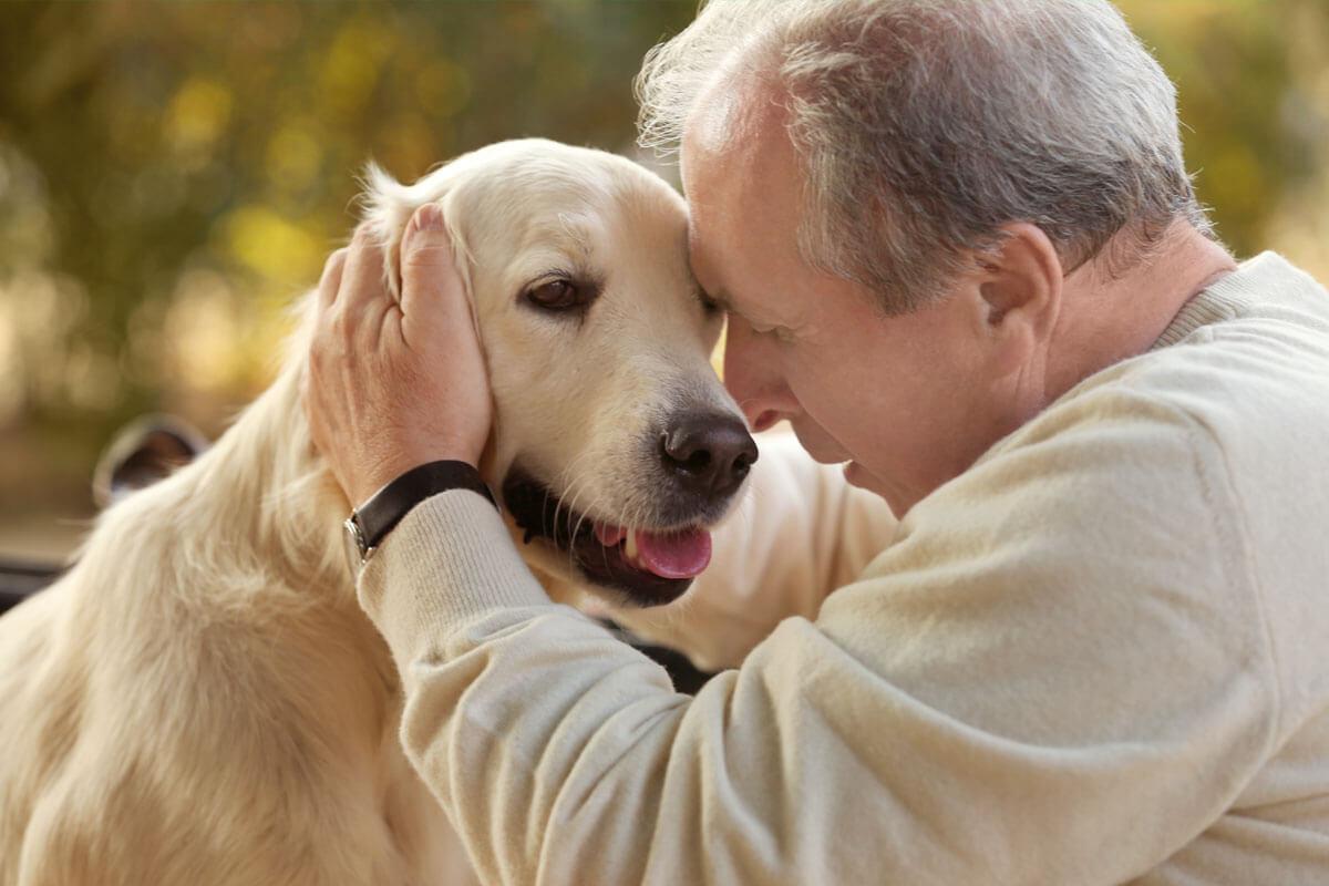 Hund schützt Herz