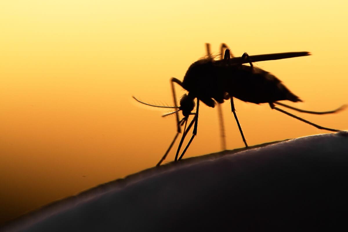 Malaria im Urlaub vorbeugen