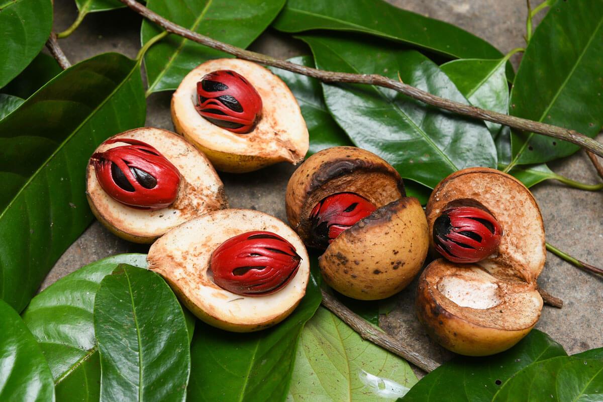 Muskatnussbaum, © by Santhosh Varghese/Shutterstock.com