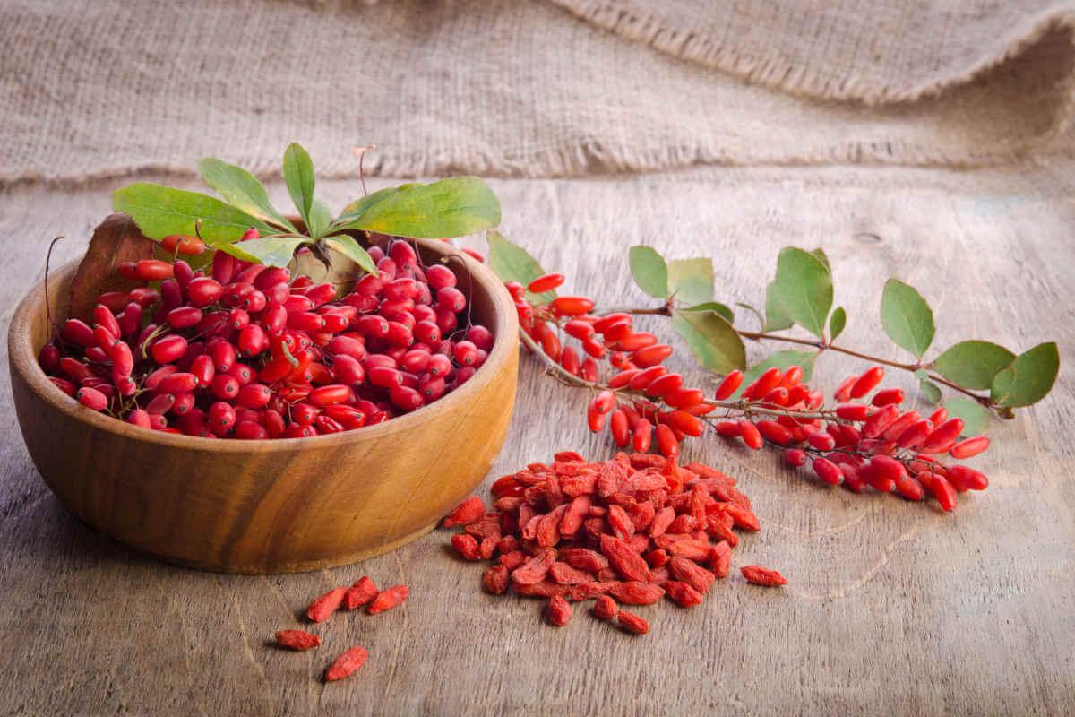 Nahrungsergänzung im Blick: Goji-Beeren