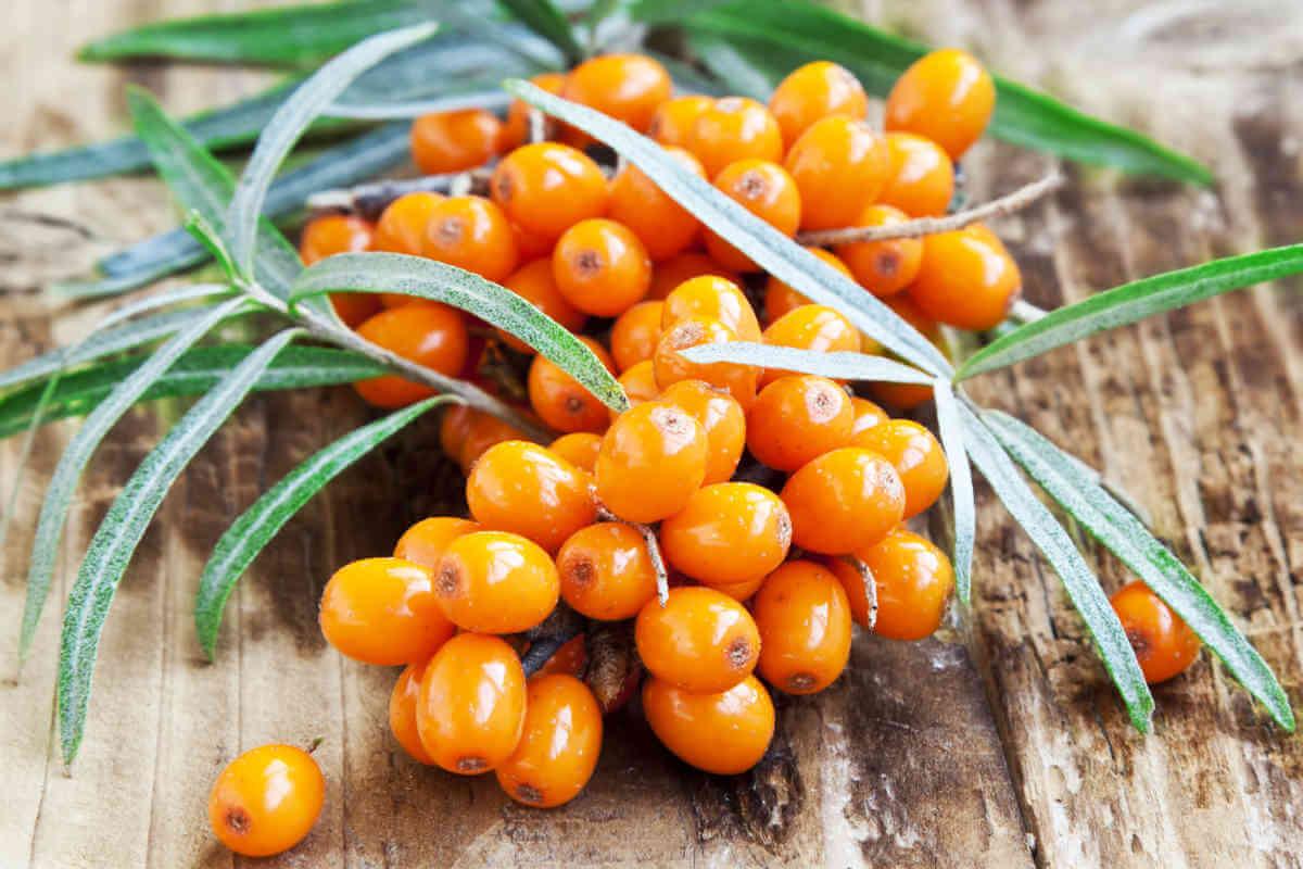 Nahrungsergänzung im Blick: Vitamin C