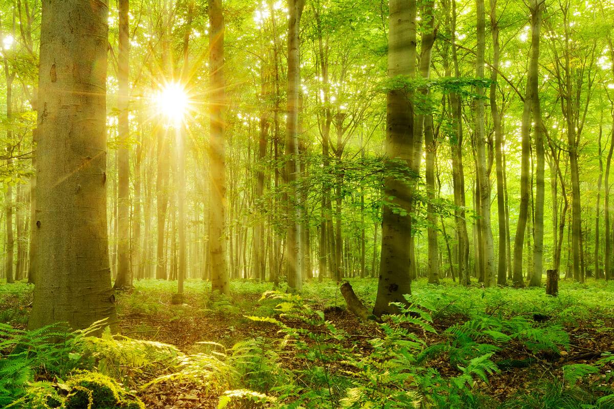 Bild Waldbaden als Therapie