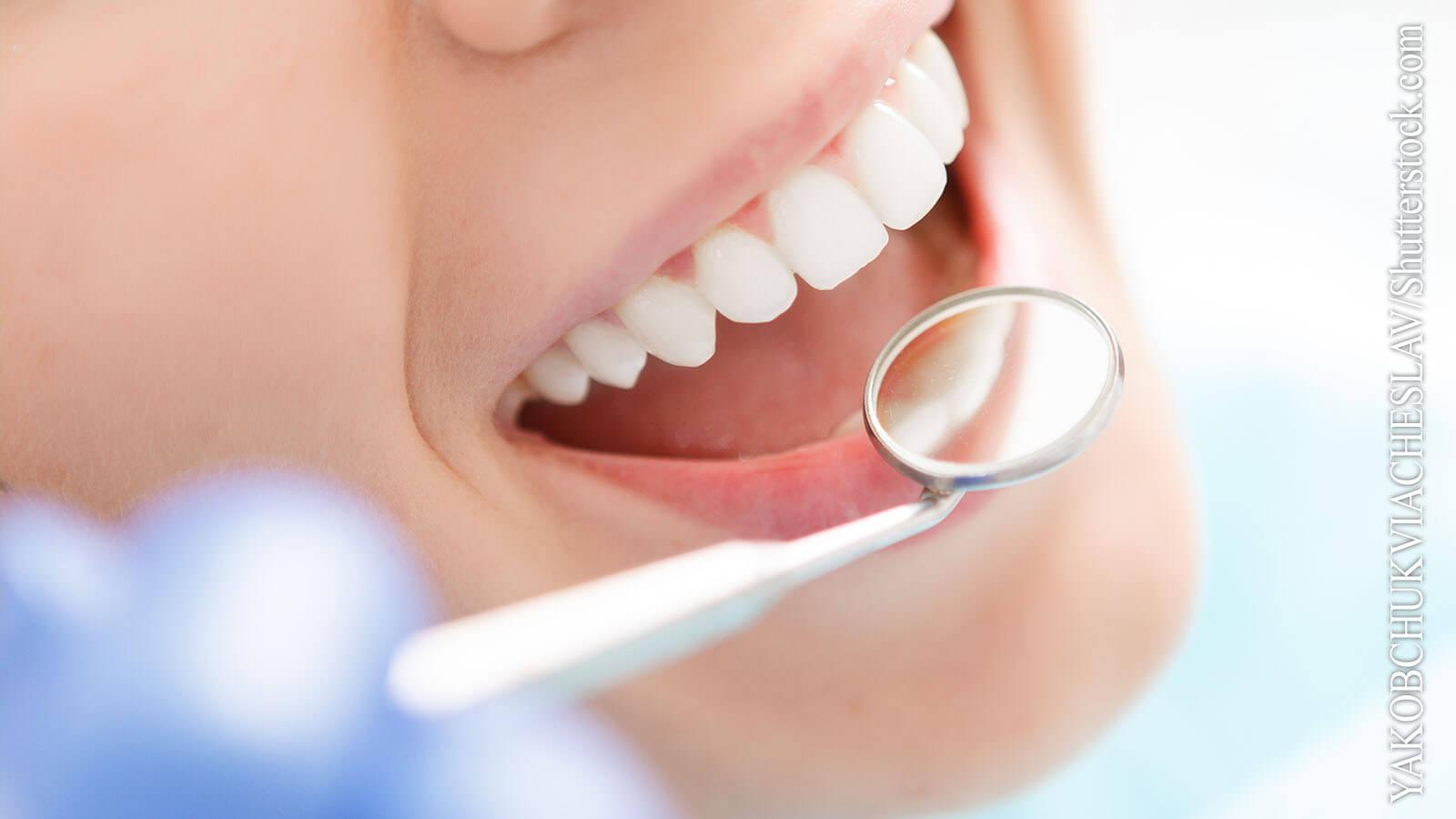 Zähne und Kiefer