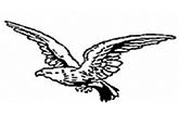 Adler-Apotheke Nossen Nossen Logo
