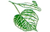 Linden-Apotheke Lichterfelde Berlin Logo