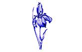 Iris-Apotheke Neubrandenburg Logo