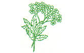 Flora-Apotheke Hohenlockstedt Logo