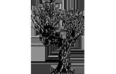 Weiden-Apotheke Monheim Logo