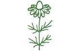 Heilkräuter-Apotheke Wuppertal Logo