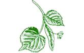 Linden-Apotheke Rheinsheim Philippsburg Logo