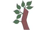 Antonius-Apotheke Schemmerhofen Schemmerhofen Logo