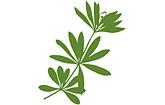 Waldmeister-Apotheke Ilmenau Logo